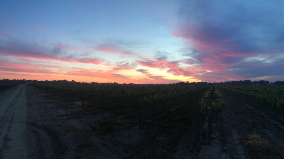 Sunset-in-the-Vineyard